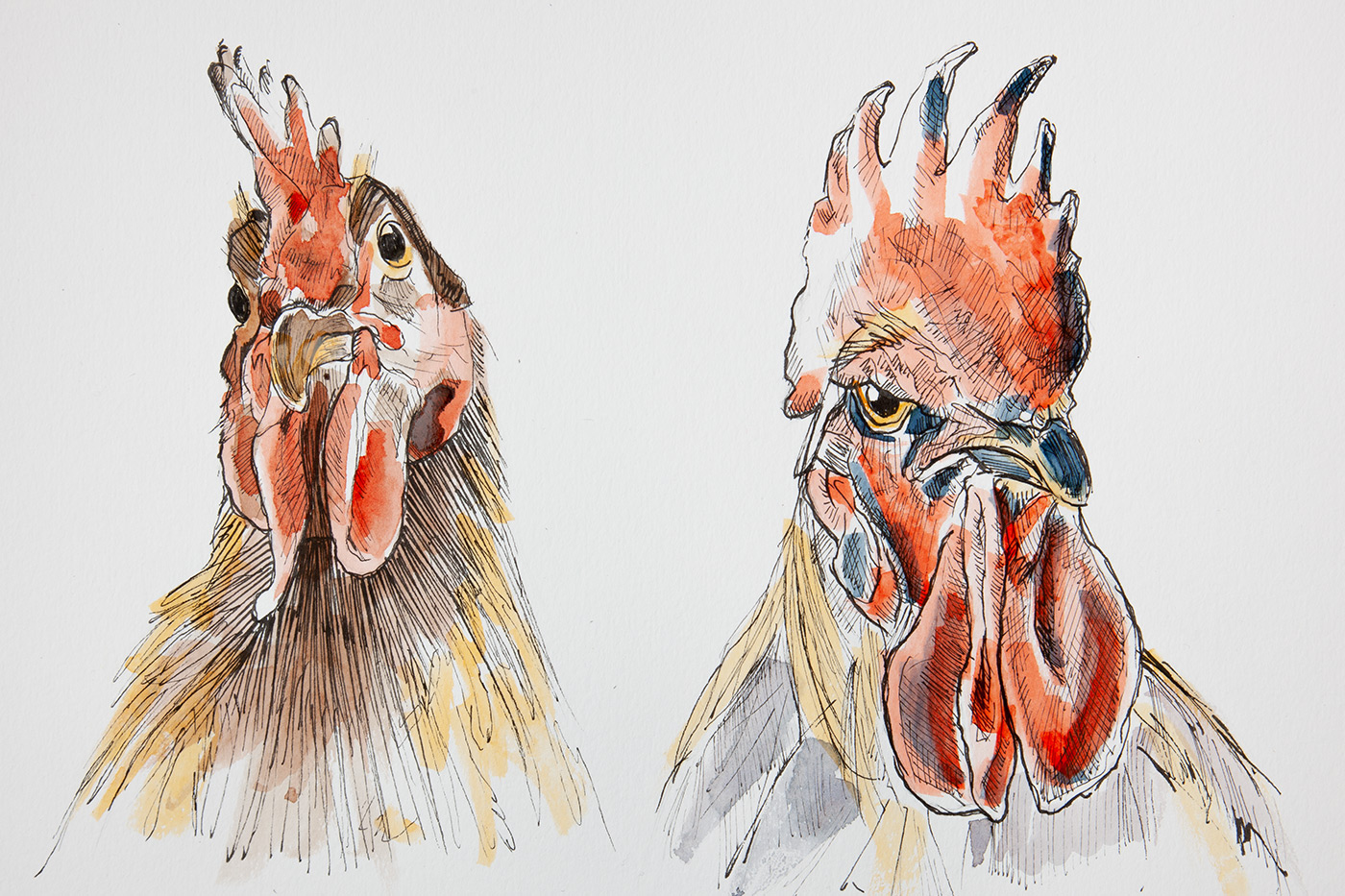 El retrato de un gallo